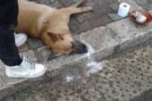 Avvelenamento cani, è allarme!