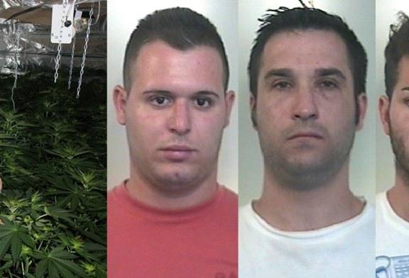 """Scoperta una piantagione di """"cannabis indica"""". Tre arresti"""