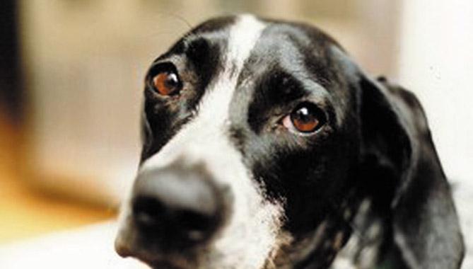 Il lettore segnala: Quei cani sono maltrattati ed abbandonati