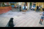 Cani randagi anche a Scuola, il disappunto dei genitori