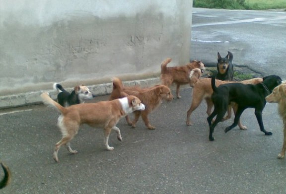 Rincorso da dieci cani nella notte. Giovane sotto shock