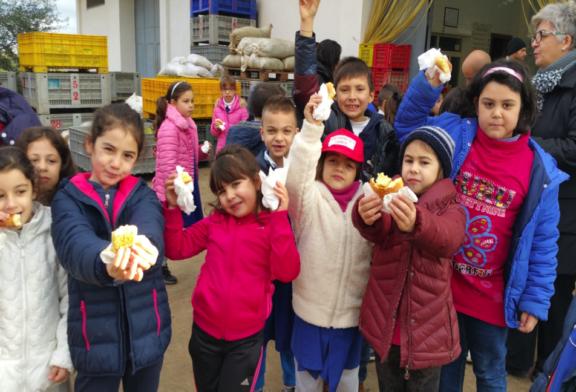 Dalle olive all'olio, il progetto degli alunni del Bonanno