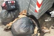 Cartolina da Misilmeri, cani uccisi e gettati come rifiuti