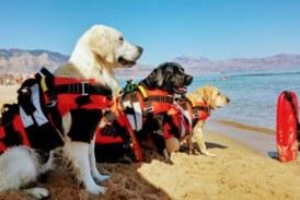 Bambina misilmerese salvata da tre cani bagnino