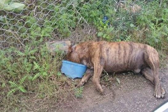 Cane morto da settimane in Contrada Algheria