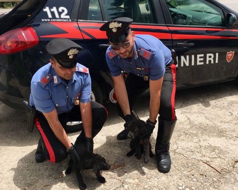 Misilmeri, salvati dai Carabinieri quattro cuccioli