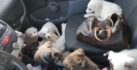 Volontaria salva 18 cuccioli abbandonati