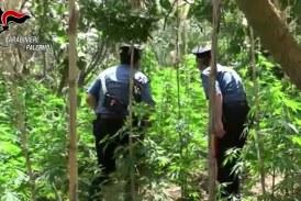 Cannabis nelle campagne misilmeresi, arrestati in tre